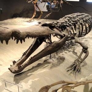 Този древен крокодил е имал зъби с размера на банани – идеални за яденето на динозаври
