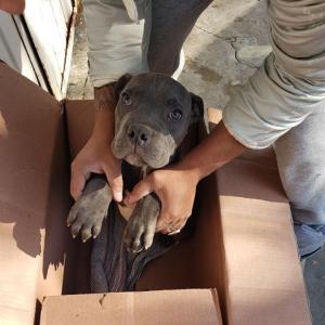 12-годишно дете остави кучето си в приют, за да го спаси от ритниците на баща си