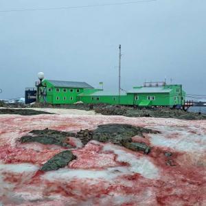 Учени откриха кървавочервен сняг в Антарктида