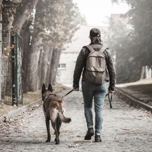 Разходката с кучето – най-полезна за здравето му