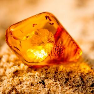 Откриха най-древния образец на животинска сперма в кехлибар на 100 млн. години