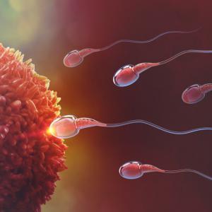 Мислехме си, че знаем как плуват сперматозоидите. Всичко обаче е било оптична илюзия