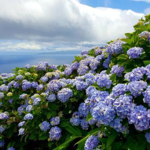 Как климатичните промени влияят върху растенията