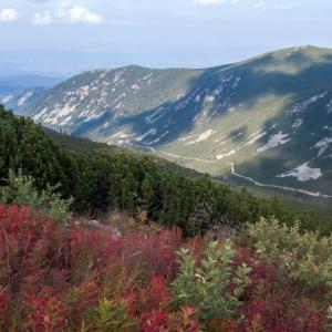 Застрашени местообитания в България: тревни и храстови