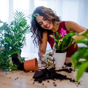 7 растения с изключителни ползи за здравето, които могат да се отглеждат в домашни условия