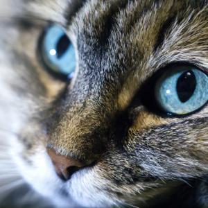 Нова технология позволява на хората да виждат през очите на животните
