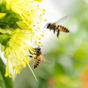 От 1990-а насам насекомите са намалели с 27%