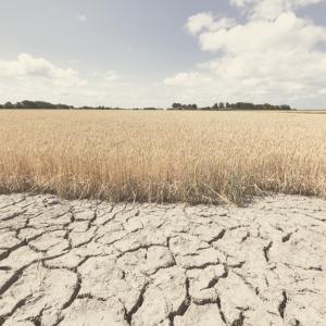 Защо 2020-та година е най-топлата в Европа