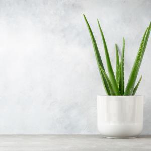 8 стайни растения за мързеливи любители градинари