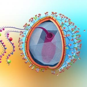 Някои потенциални ваксини срещу COVID-19 може и да направят хората по-уязвими спрямо ХИВ