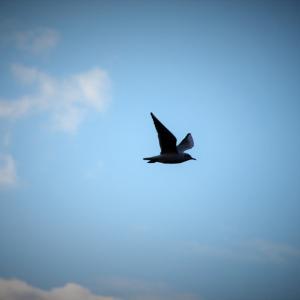 Притча за птицата