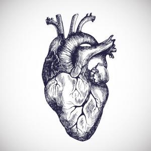 Това е първият подробен атлас на човешкото сърце