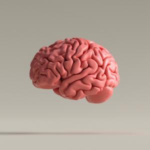 3-те механизма на мозъка, които ни помагат да разбираме думи, чувства и връзки