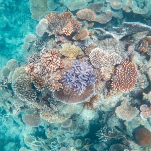 От 1995-а насам сме изгубили над 50% от коралите в Големия бариерен риф