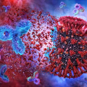 Колко дълго след COVID-19 имаме антитела?