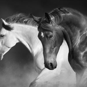 15 любопитни факта за конете