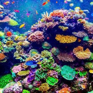 Силните циклони могат да увредят кораловите рифове на хиляда километра