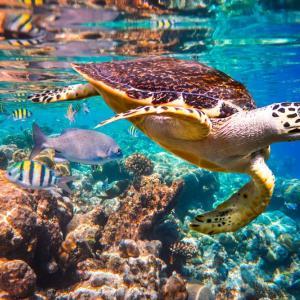 До 2100 г. ще изчезнат почти всички коралови рифове на планетата