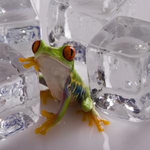 Жабите могат да замръзнат, без да умрат