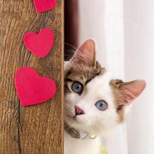 """Как котката ви казва: """"Обичам те!"""""""