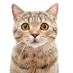 10-те невероятни факта за котките