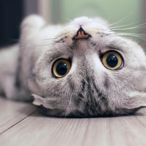 Език на тялото и поведение: 7 сигнала, които всеки истински коткар трябва да разпознава