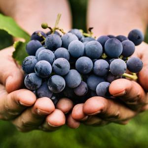 Притча: Чепка грозде