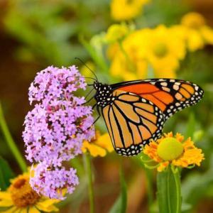 Колумбия - страната с най-голямото разнообразие от пеперуди в света