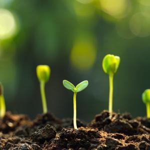 Корените на растителната интелигентност