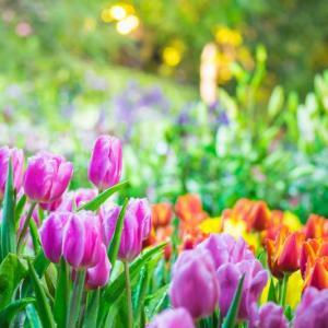 Глобалното затопляне убива аромата на цветята