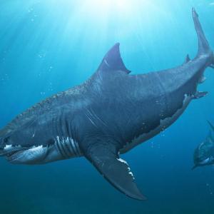 Какво е предопределило съдбата на гигантския мегалодон? Древните му зъби крият орговора