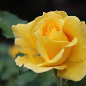Езикът на цветята: 10 цветя с негативно значение