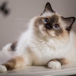 Невероятните 10 факта за котките