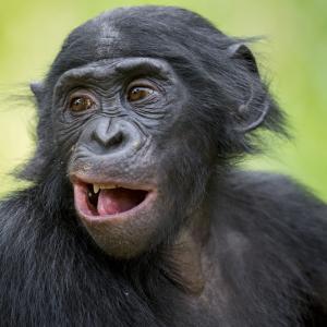 Ето какви са разликите между телата на хората и маймуните