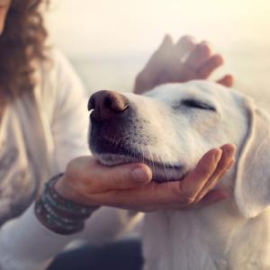 И думите, и интонацията носят информация за кучетата