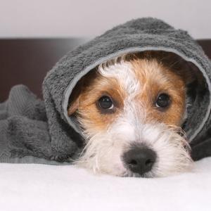 Трогателно проучване показва защо не трябва да крещим на кучето си