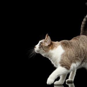 Размахва ли нахално котката ви опашката си пред лицето ви?