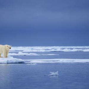 За първи път: Ледът в сибирския арктически регион не успя да замръзне до края на октомври