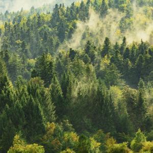 Застрашени местообитания в България: Горски. Иглолистни