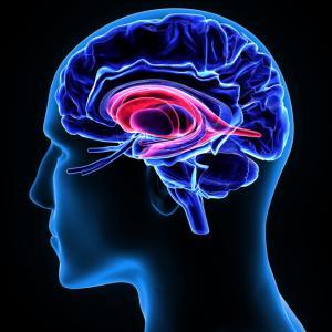 Мозъкът на мъжа предпочита секса пред храната