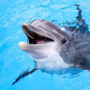 Делфините са развили личностни характеристики, сходни с тези на хората