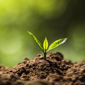 Растенията могат тайно да изпращат подземни електрически сигнали
