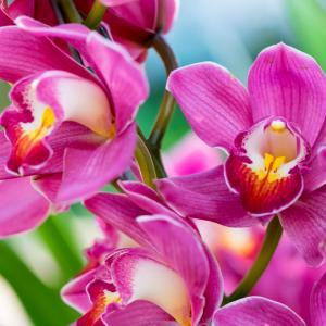 Сексуалната измама на орхидеите
