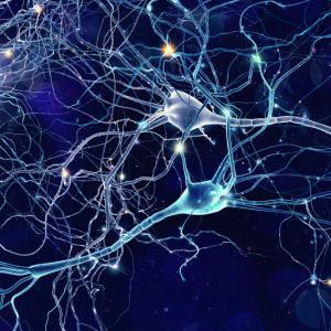 Невероятно видео показва как мозък унищожава мъртви неврони за първи път