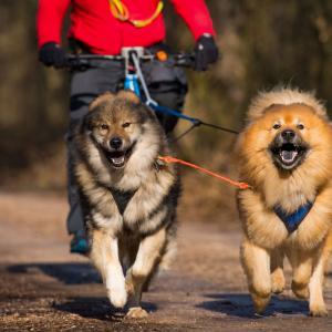 Тичане и каране на колело с вашето куче