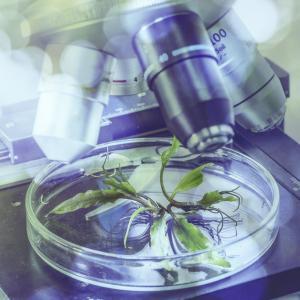 Чудесата на молекулярния свят