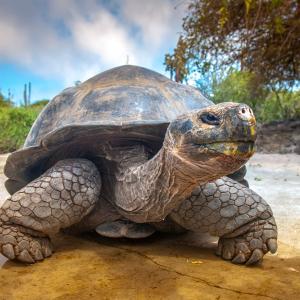 Притча за костенурката