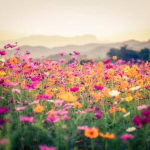 Притча за вятъра и прелестното цвете