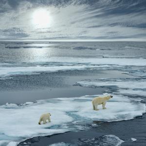 Учени: Без морски лед Арктика вероятно ще се стопи