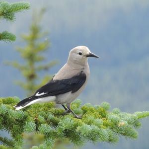 Симбиоза: Една изненадваща история за сътрудничество между видове